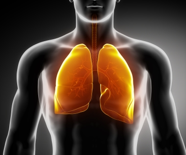 Are My Lungs Joined To My Large Intestine?
